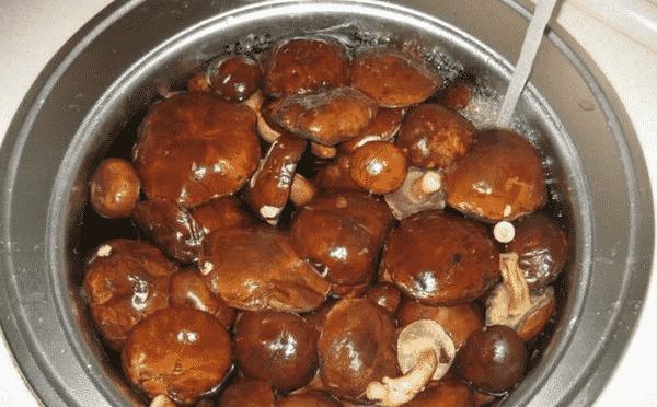 Скільки варити польські гриби