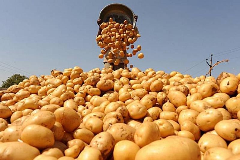 Особливості ранньої картоплі в Україні