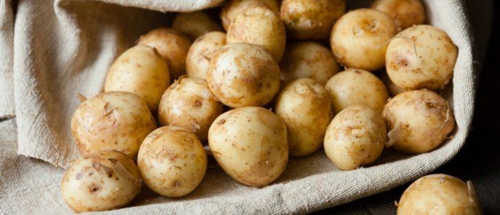 Найврожайніші та ультраранні сорти картоплі в Україні