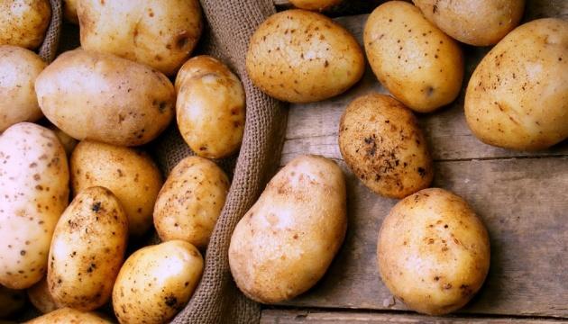 Найврожайніші сорти картоплі української селекції