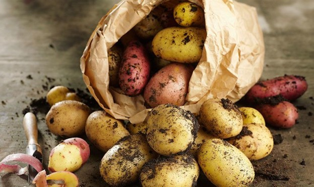 Найсмачніші сорти картоплі голландської селекції