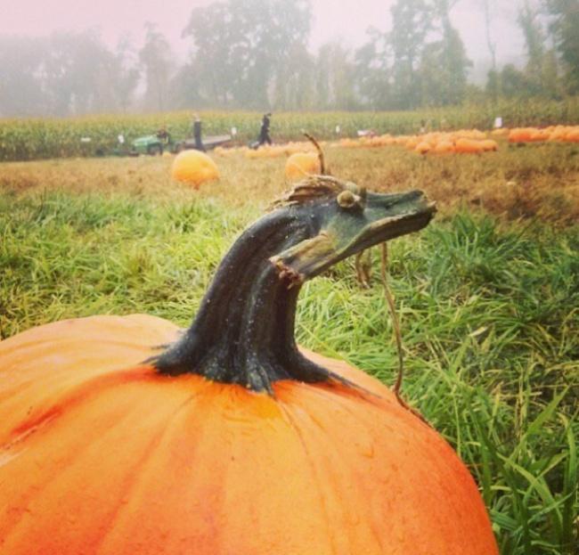 гарбузовий дракон