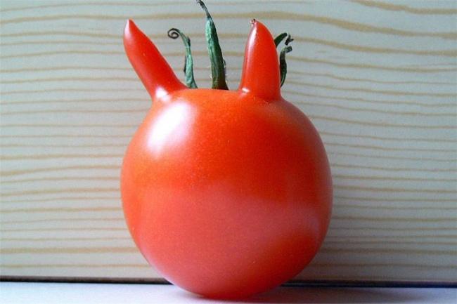 помідор з ріжками