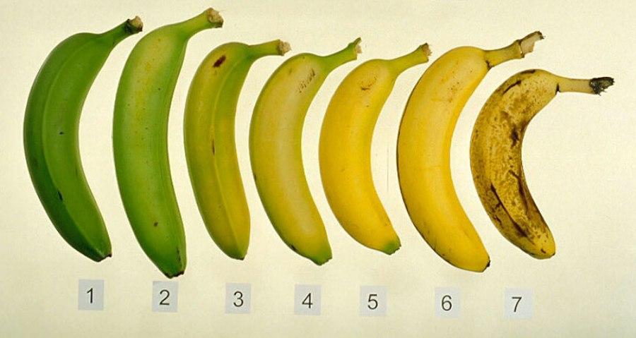 stadii-coacere-banana1