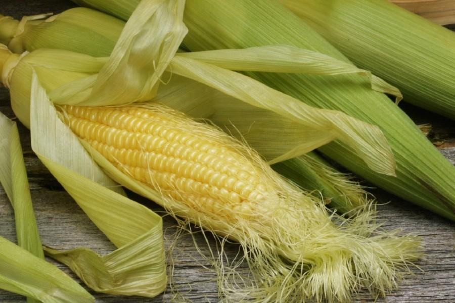 kukuruza-eda